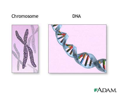 chromosomes-and-dna-picture